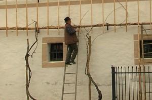 Rez stare trte Arnovčanke @ pred gasilskim domom v Arja vasi